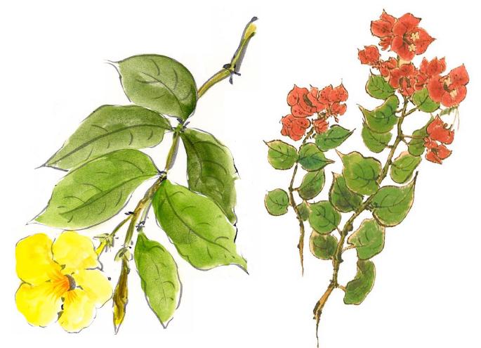 花の絵手紙講座