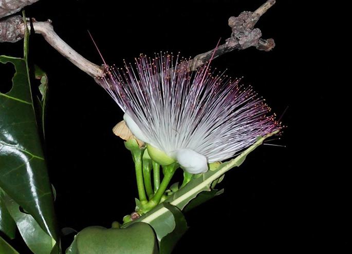 世界自然遺産候補地 奄美・やんばる・西表の貴重な植物展