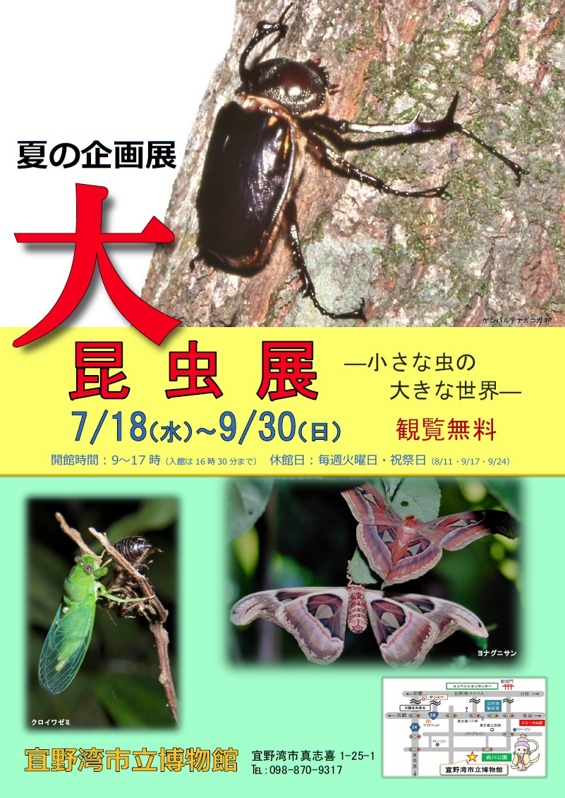 夏の企画展「大昆虫展-小さな虫の大きな世界-」