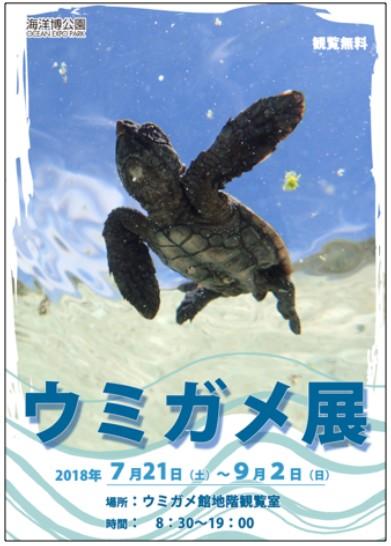 ウミガメ展