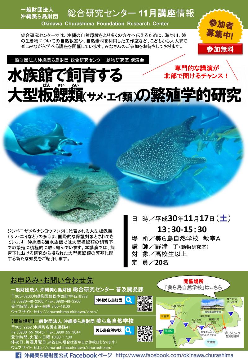水族館で飼育する大型板鰓類(サメ・エイ類)の繁殖学的研究