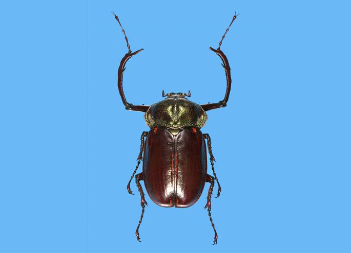 触れる昆虫展「沖縄と世界の貴重な昆虫展~植物になりきる昆虫たち~」